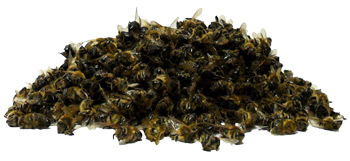 Изображение: Пчелиный подмор